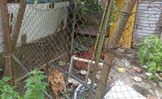 ФОТО | Ужасная история! В Валге хозяин заставляет собаку и кролика жить в мусоре
