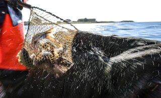 Еврокомиссия внедрила экстренные меры по защите запасов трески в Балтийском море