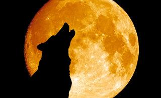 Täna tuleb maagiline öö: täiskuu, ringi liikuvad vaimud ning ootamatud ja salapärased sündmused