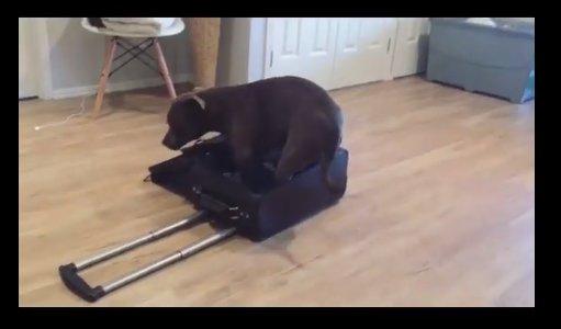 Humoorikas VIDEO: Vaata, see koer peab küll end kassiks