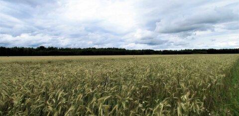 Leili metsalood | Siin kasvab leivavili
