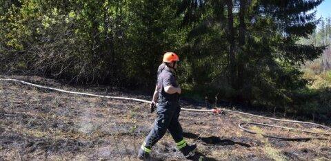 ФОТО | В Вильяндимаа горит лес, огонь повредил линии электропередачи