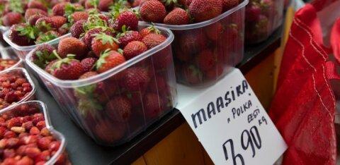 Millal ja mis hinnaga jõuab tänavu müüki Eesti maasikas? Küsisime maasikakasvatajalt järele