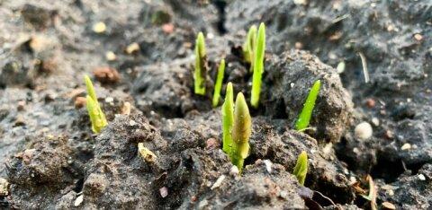 Эстонский фонд природы отменил весенние толоки