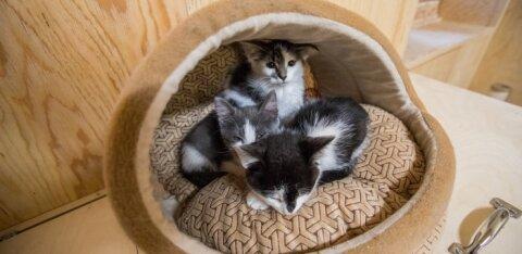 Управа Ласнамяэ: ждем подарки для животных из приютов до 29 марта!