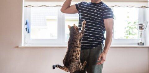 TRIKIFOTOD | Eesti jalgpalluril on kodus kass, kes on peremehest vaat et kuulsamgi