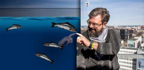 Kalatööstur Indrek Kasela: lõpuks vastutab ju pood, mida ta müüb, olematut kontrolli peaks suurendama