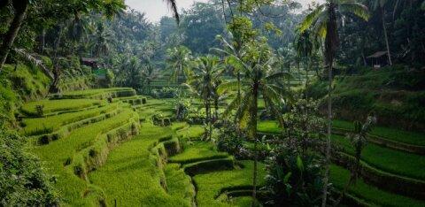 Бали откроется для иностранных туристов с 11 сентября