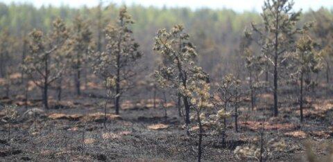 ФОТО | Пожар в Клоога оставил после себя выжженную землю
