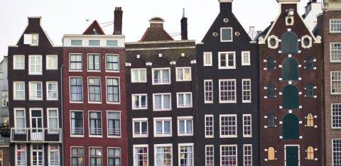 Тюльпаны вместо марихуаны: зачем теперь поедут в Амстердам