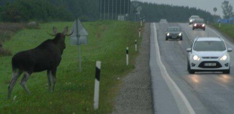 Столкновение с животным на дороге: что нужно знать о страховке