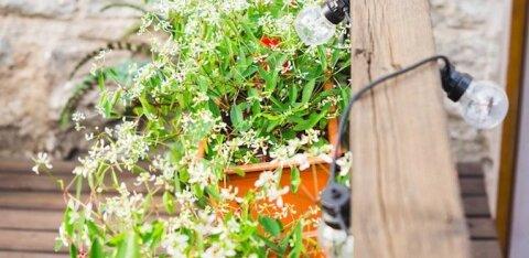 """Жители Ласнамяэ, присылайте в управу фото своих """"зеленых"""" балконов!"""