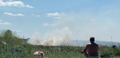 ФОТО И ВИДЕО | На Штромке загорелся тростник. Но дым отдыхающим помехой не стал