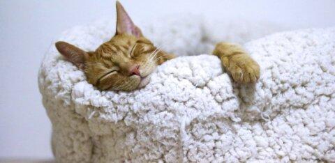 8 причин, из-за которых постоянно хочется спать
