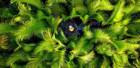ФОТО   Рыбалка под кокосовыми пальмами во Вьетнаме