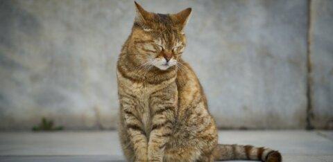 Неслыханная жестокость! В Вильяндимаа мужчина задушил кота