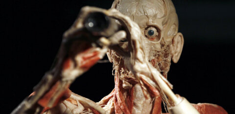 В Эстонию впервые приезжает всемирно известная выставка человеческих тел Body Worlds