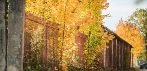 Ноябрь начался: чем нас порадует погода в грядущие выходные?