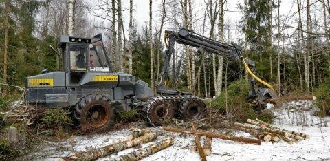 Pärnu lähistelt leiti uus kanakulli pesapuu, RMK peatas raie
