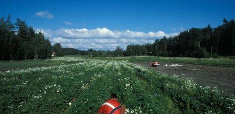 Soome plaanib 1500 ukrainlast tšarterlendudega põllutöödele tuua