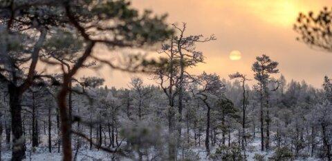ГРАФИК: Российский метеопортал предрекает Эстонии сильнейшие морозы