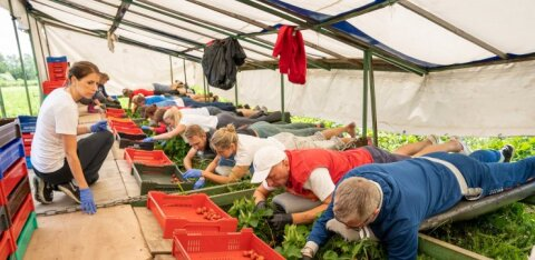 Maasikakasvatajate liidu esindaja: me ei ootagi Martin Helmelt vabandust. Valitsuse nõunik võttis juba hüvitise osas ühendust