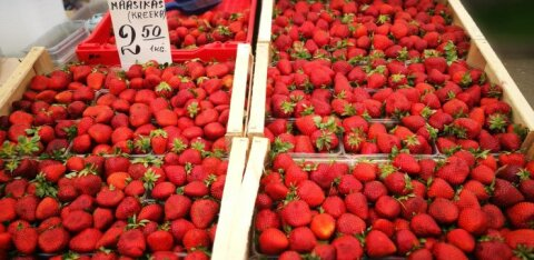 Департамент сельского хозяйства уличил эстонского поставщика «химической» клубники в противоречиях
