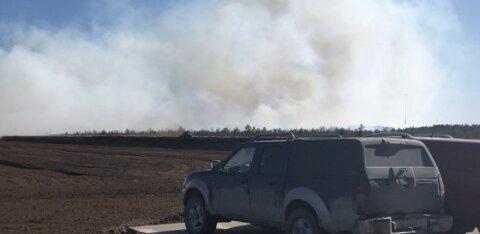 ФОТО | В Пярнумаа горело торфяное болото. Из-за сильного ветра огонь распространялся очень быстро