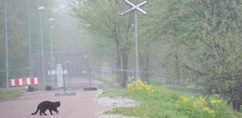 Дожди, туман, гроза? Какая погода нас ждет в ближайшие дни