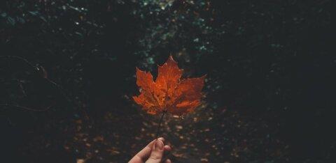 Что нужно успеть каждому знаку Зодиака до конца ноября