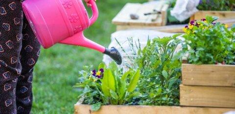 Таллинн открыл прием ходатайств о получении пособия на создание и развитие общественных садов