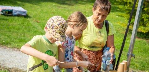 Для всей семьи: владельцы частных лесов проведут в Таллинне День леса