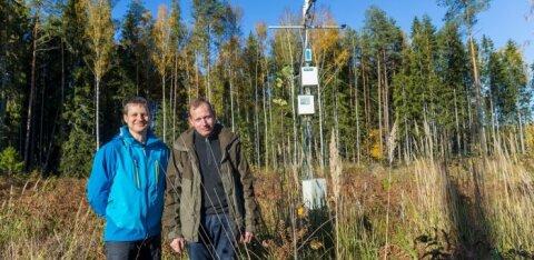 Ühe metsatüli anatoomia: kas teadlasi saab usaldada? Aga milliseid teadlasi?