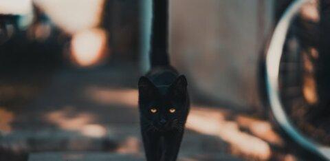 Самые странные суеверия, которым следуют знаменитости