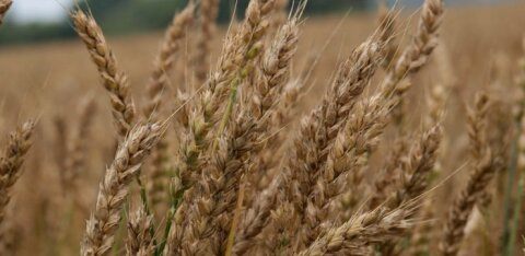 SEB: рекордный урожай прошлого года и более дешевое топливо поддерживают перспективы сельского хозяйства