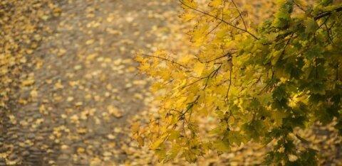 Уикенд порадует осенним теплом, но не солнечной погодой