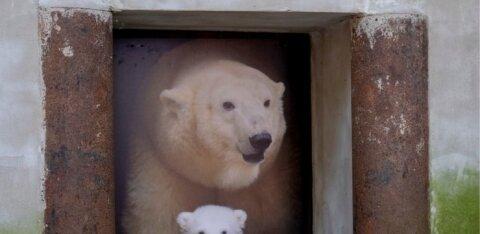 Жительница Таллинна завещала все свое имущество, почти 50 000 евро, зоопарку