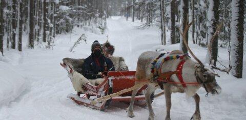 DELFI ROVANIEMIS | Ott Tänak: lumehanged lubavad meil riskivabamalt riske võtta