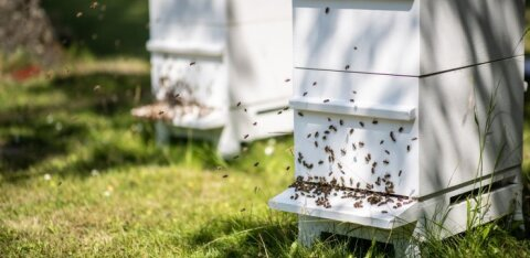 Kutselised mesinikud panid senini vaikiva kokkuleppena kasutusel olnud mesindusstandardid paberile