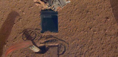 Marsimutt jätkab kaevamist