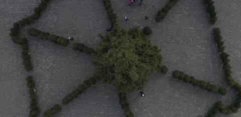ФОТО и ВИДЕО | На Ратушной площади открылся Солнечный лабиринт из елок