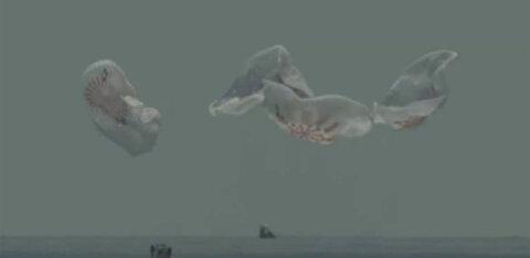 FOTOD | NASA astronaudid naasid SpaceXi kosmoselaevaga Crew Dragon Maale