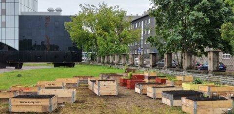 На огороде за суперминистерством научат делать уличную мебель
