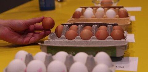 DELFI VIDEO | Suur munatest: kas maitse ja värvi põhjal saab vahet teha, kas tegemist on talumuna või puurikana munaga?