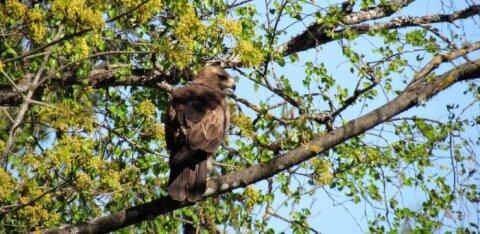 Leili metsalood | Linnurahval on pered toita