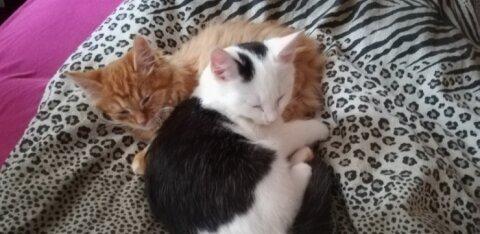 VIDEO   Lucky ja Lamborgini lugu: mis on saanud Sillamäel mürgitatud kassidest? Vennad hoiavad teineteisest kinni