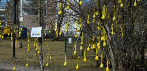 ФОТО: В парке Ряягу отмечают канун Пасхи деревом шоколадных яиц