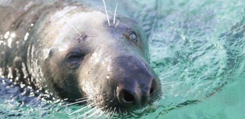 ФОТО: В Таллиннском зоопарке тюленям устроили настоящий праздник