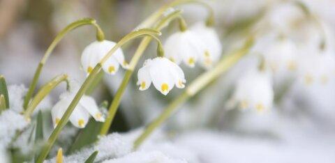 В Таллинне 16 февраля был побит температурный рекорд