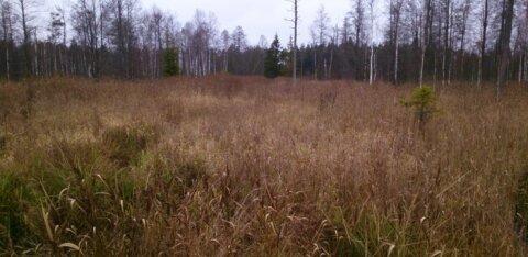 Министерство обороны восстановит болото Керетю